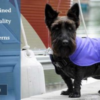 Introducing Richards Dog Harness Coats