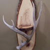 Antler Shelves