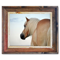 Haflinger Canvas Print Framed in Barnwood