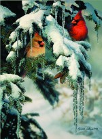 Giclee Art Cardinals Winter Scene