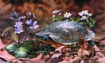 Giclee Art Wood Turtle by award-winning Michigan artist Russell Cobane