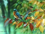 Giclee Art Bluebirds and Beech Leaves
