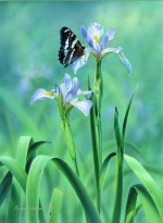 Giclee Art Butterfly and Iris by award-winning Michigan artist Russell Cobane