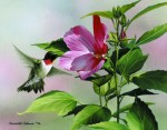 Giclee Art Hummingbird Hibiscus by award-winning Michigan artist Russell Cobane