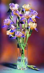 Giclee Art Iris Flower by award-winning Michigan artist Russell Cobane
