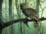 Giclee Art Owl Spirt of the Forest