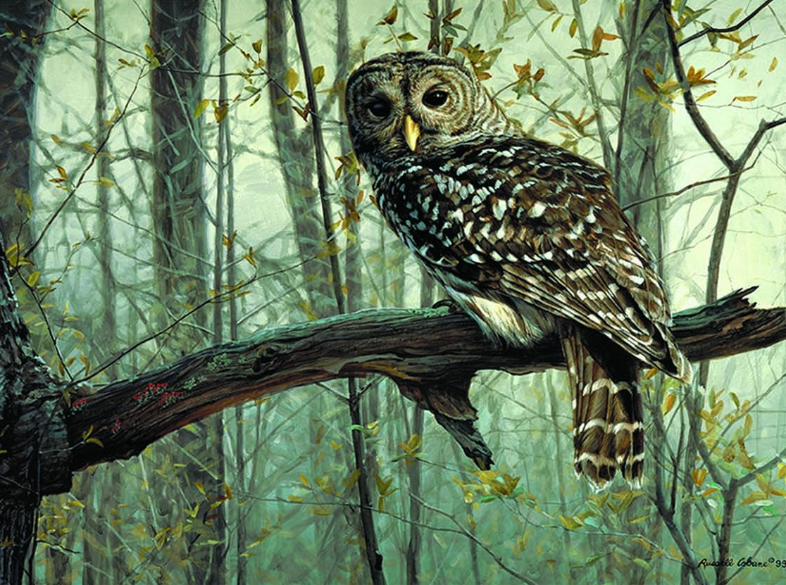 Wildlife Gicl 233 E Art Cobane Studio