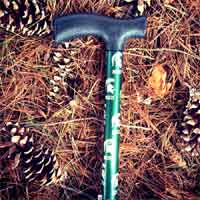 Michigan State Cane