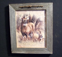 Country Pine Handcrafted Barnwood Framed Buck Doe Picture Trimmed with Barbed Wire
