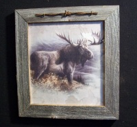 Moose Picture Framed in Barn wood