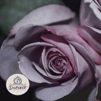 Purple Roses Fine Art Postcard