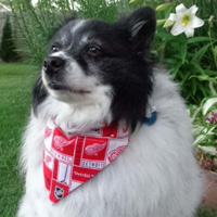 Dog Bandana - Detroit Red Wings