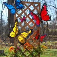 Introducing Great Lakes Butterfly Collection