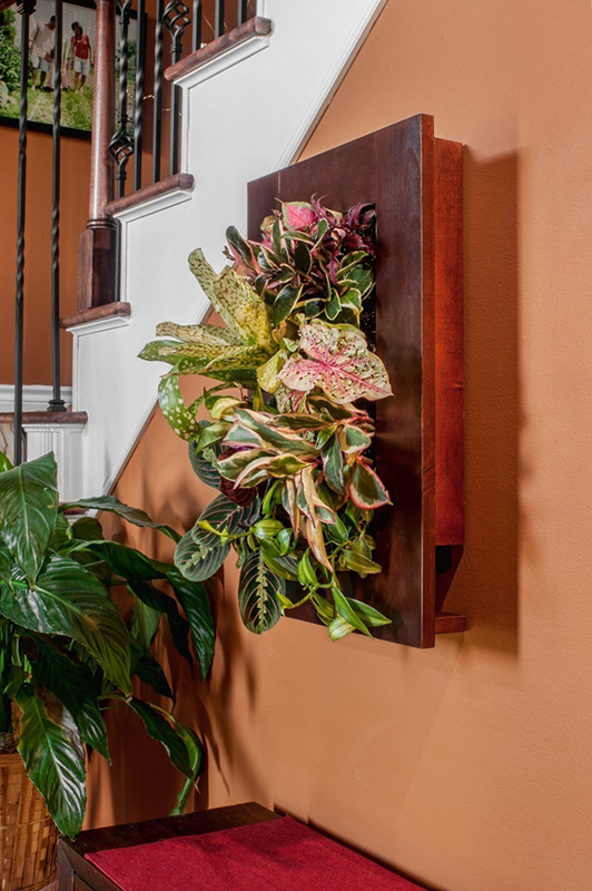 Indoor outdoor living planter frame kit cherry - Indoor living wall planter ...
