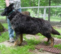 Primp-N-Poo Pet Shampoo before picture