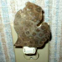 Petoskey Stone Michigan Nightlight