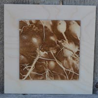 3D Radish Roots Picture Burned Into Wood