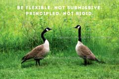 Picture A Conversation - Goose Talk