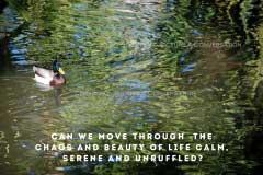 Picture A Conversation - Move Through Chaos