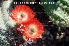 Picture A Conversation - New Bud