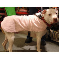 Cooling Dog Harness Coat