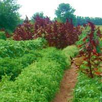 Deb Groat Seed Garden