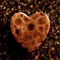 Petoskey Stone Heart Shape Magnet