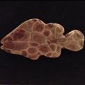 Petoskey Stone Fish Magnet