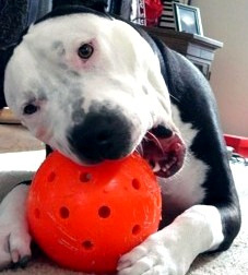 Unbreakable Dog Ball