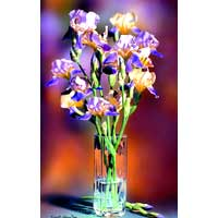 Floral Giclee Art
