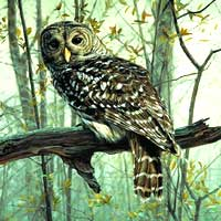 Wildlife Giclee Art