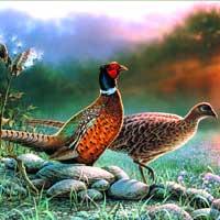 Birds Giclee Art