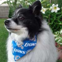 Detroit Lions dog bandana