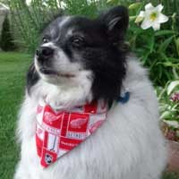 Dog Bandana – Detroit Red Wings